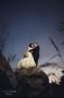 Molnár Arnold esküvőfotós szombathelyi esküvői fotós